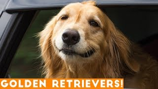 The Funniest & Cutest Golden Retriever Compilation of 2018 | Funny Pet Videos