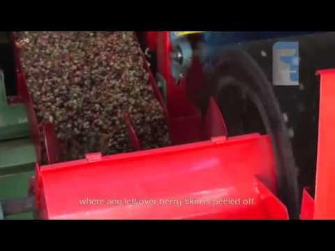 Coffee Pulping, Cleaning & Drying Process-2 by Fresh Food Technology India Private Limited