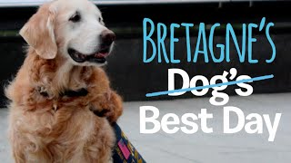 Last 9/11 Search and Rescue Dog Bretagne Comes Back to NYC | DOGS BEST DAY!