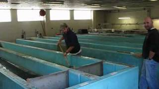 So you want to be a fish hatchery manager for Virginia fish hatchery