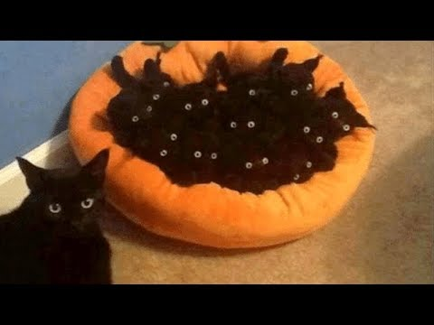 CATS are on Earth to MAKE US LAUGH - Super FUNNY CAT VIDEOS compilation
