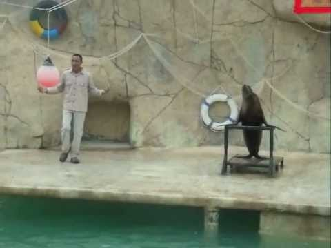 Sea Lion Show at the Friguia Park - Tunisia