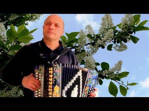 ♫ Похолодало ♫ Душевная песня под гармонь╰❥ Unter Akkordeon Lieder der Liebe! Играй гармонь любимая
