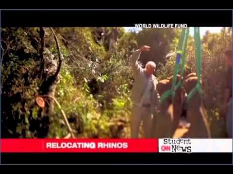 Rhino goes extinct [CNN Student news, transcript, 윤현우]