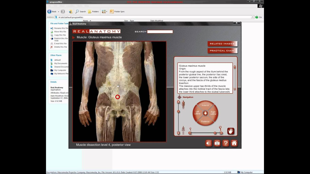 Real anatomy software