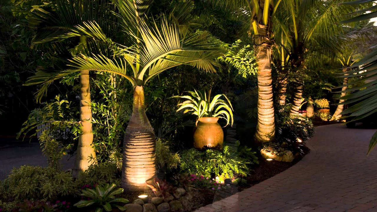 Tropical Palm Gardens With Tropical Palm Trees