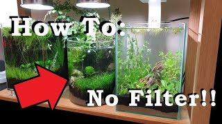 How To: 2 Gallon || No Filter, No heater, No Ferts, No co2