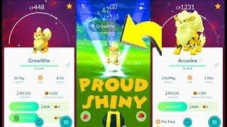 Pokemon Go - Shiny Growlithe & Shiny Arcanine After 1172 Random Encounters + More
