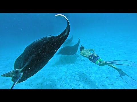 SWIMMING WITH MANTA RAYS - TRAVELING IN THE MALDIVES
