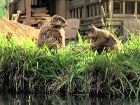 Geico Commercials Part1 - Cavemen, Woodchucks, Little Piggy And More! video