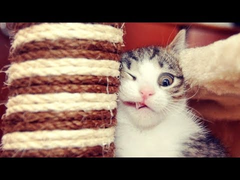 Funniest CAT VIDEOS make this TRY NOT TO LAUGH challenge IMPOSSIBLE! - Funny CAT compilation