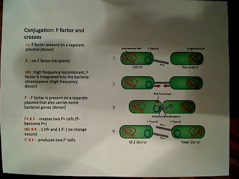 Gene Transfer Conjugation F Factor plasmid