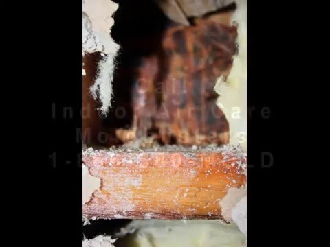 Westchester Mold Remediation Water Damage