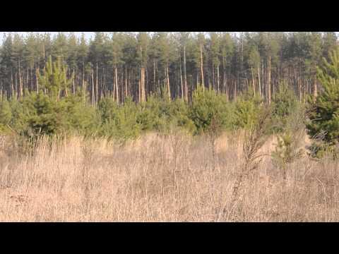 ловля жаворонка юлы