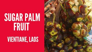 Sugar Palm Fruit in Vientiane, Laos