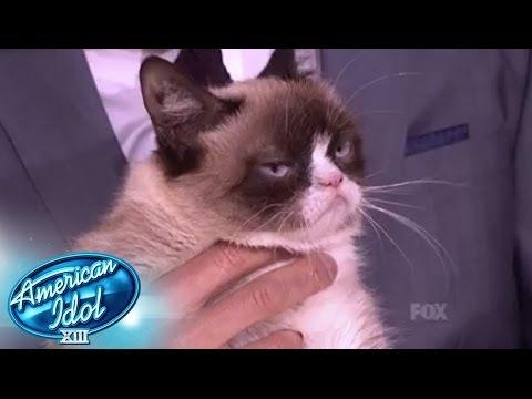 Cat American Idol American Idol Xiii