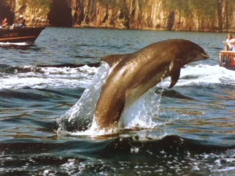 wild-dolphin-jumps-out-of-water-hd.html