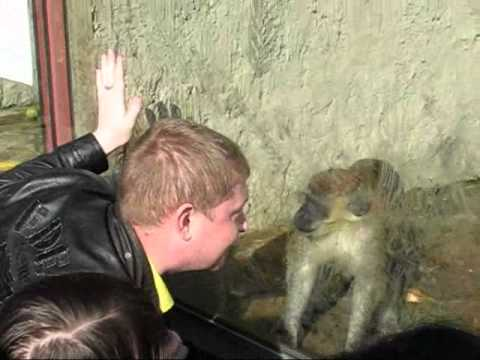 Обезьяна жжет в зоопарке ЕКБ (осторожно пошлость)