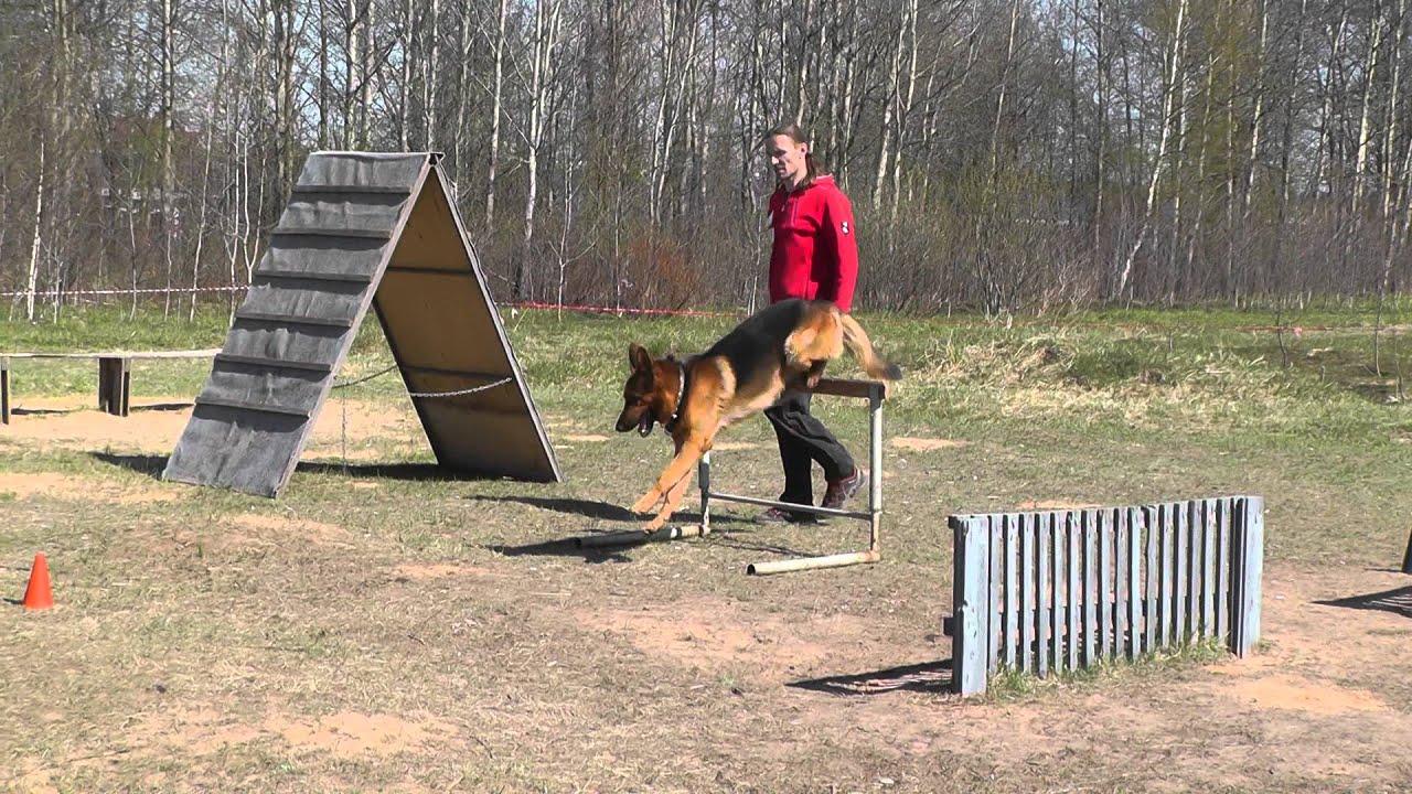 Как научить собаку командам в домашних условиях, каким 61