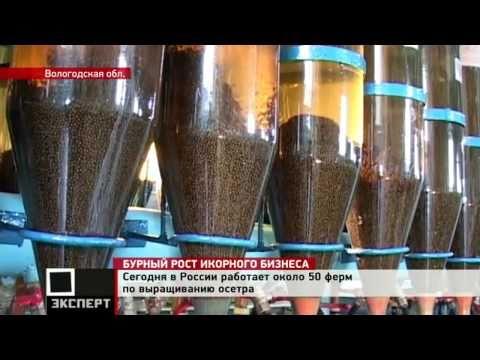 Репортаж о черной икре на российском рынке