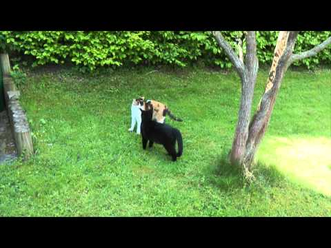 Zwei Katzen Spielen Im Garten