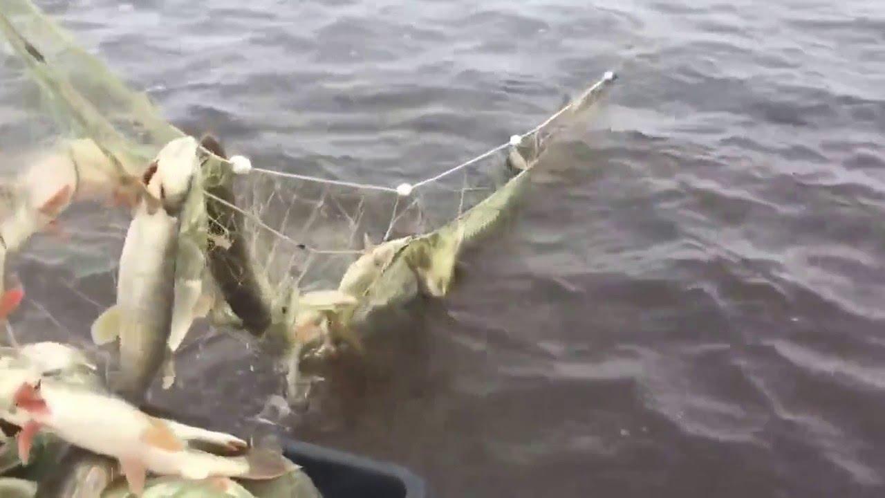 ловля рыбы в сентябре на сети
