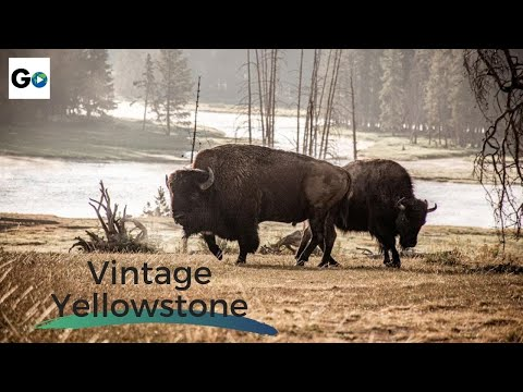 Yellowstone: The World's First National Park - Full Vintage Documentary - 3224