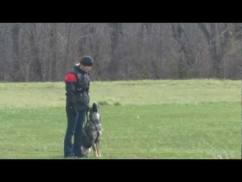 Schutzhund BH routine - Cues