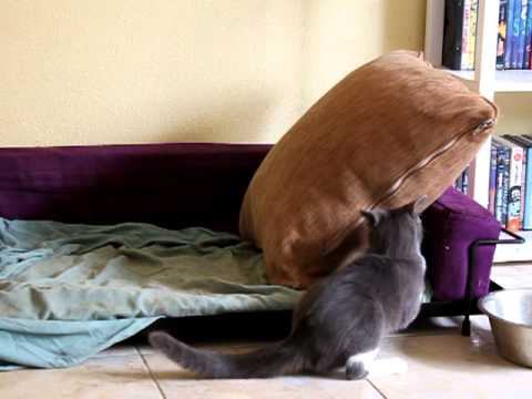 furet VS staff et chat
