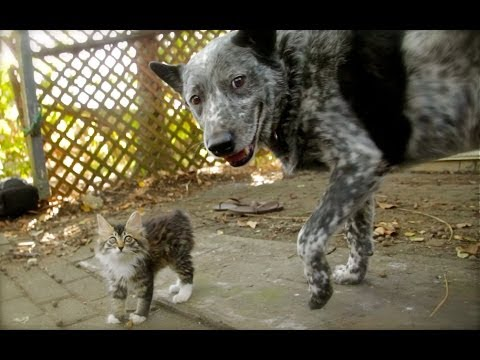 Dog Befriends Disabled Kitten