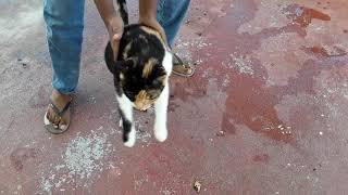 Cat funny Aaron animals 2st