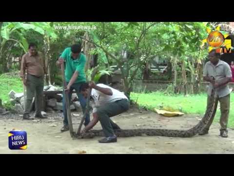 python escaped dog|eng