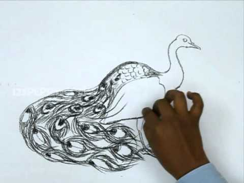 how to draw dancing peacock