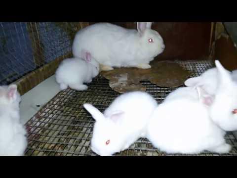 ЖИВЬЁМ Крольчиха съела крольчат