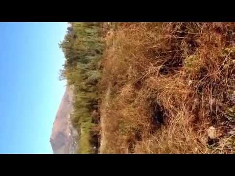 Caceria tortolas Rio Maipo (Melipilla)