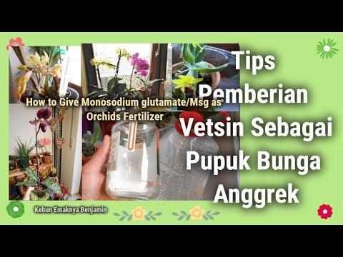 Tips Pemberian Vetsin untuk Pupuk Bunga Anggrek