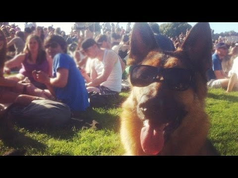 Dolores Park with Dunder the German Shepherd. San Francisco