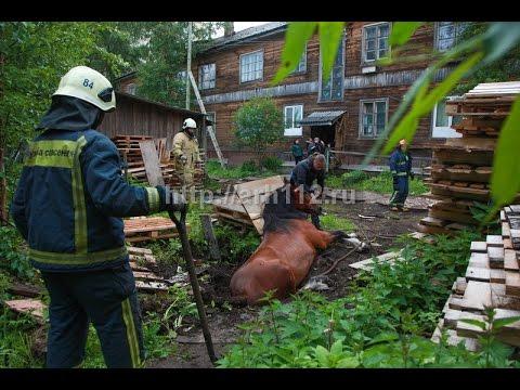 В Архангельске лошадь провалилась в заброшенный пожарный водоем