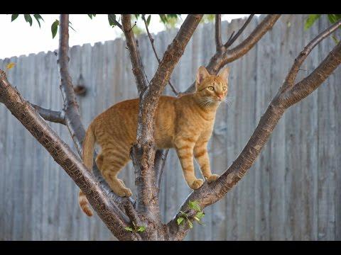 子猫救出から1年後、元気に育つネコ映像にほっこり