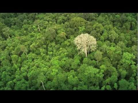 De bosques y hombres