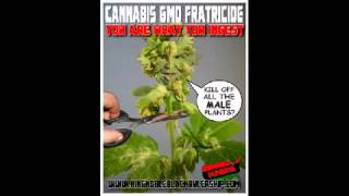 King Noble EXPOSES All Cannabis as GMO and Metaphysical Fratracide