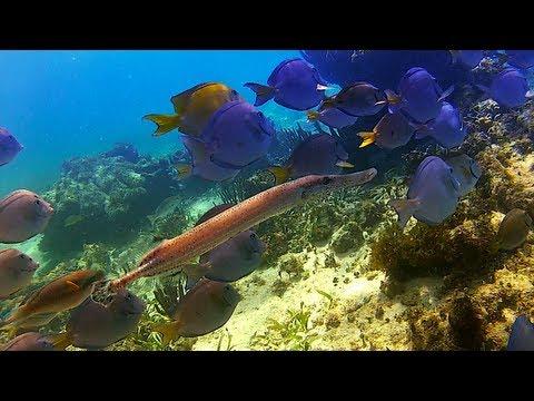 Snorkeling In Spooky Channel    Roatan, Honduras 2013