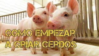 Como empezar a criar cerdos sencillos pasos - Luis Alberto