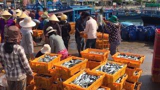 Tin Tức 24h Mới Nhất: Ngư dân Ninh Thuận trúng lớn vụ cá nam