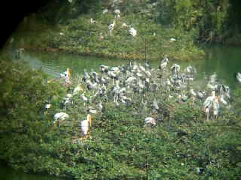 vedanthangal bird sanctuary near chennai