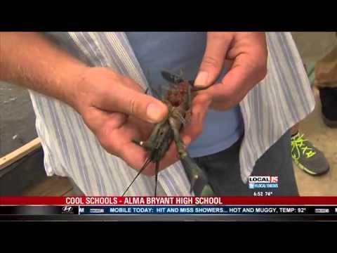 Aquaculture Department Alma Bryant High School