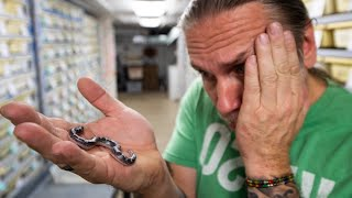 DEAD BABY SNAKE... CONTROVERSIAL TOPIC!!! | BRIAN BARCZYK
