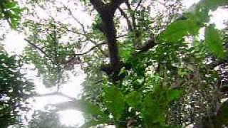 Vídeo 149 de Umbanda