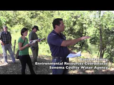 Grape Creek, California Restoration