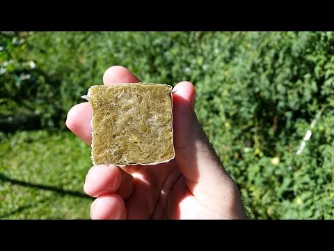 Sowing seed in Rockwool cubes for hydroponics and aeroponics